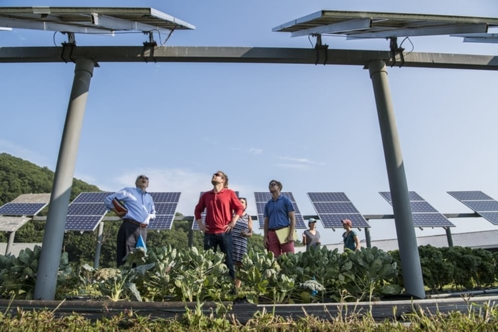 Solar Panels and people in field
